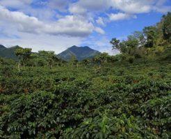 グアテマラ コーヒー 産地